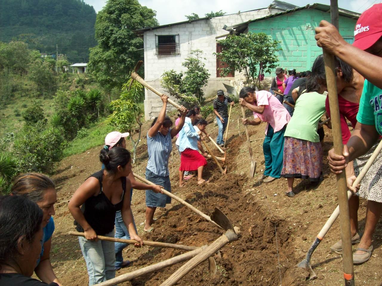 Iniciando preparación de suelo