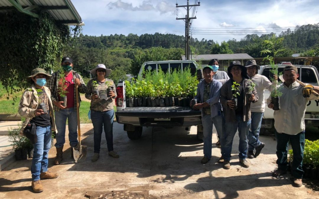 Campaña de reforestación COMSA 2021